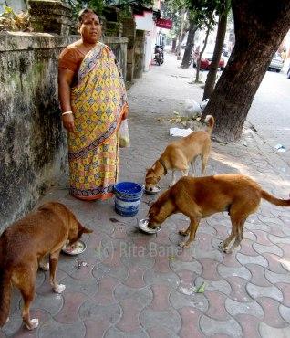 the dog lover_rita.banerji